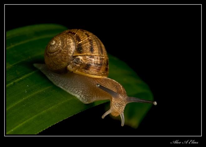 Snail_0328-copy