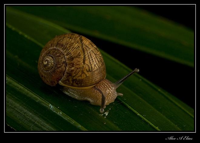 Snail_0340